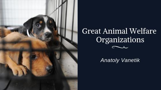 great animal welfare organizations