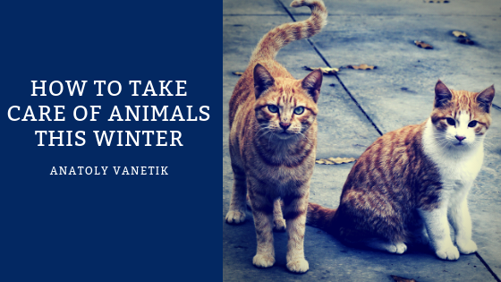 how-to-take-care-of-animals-this-winter