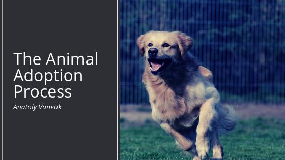 the animal adoption process
