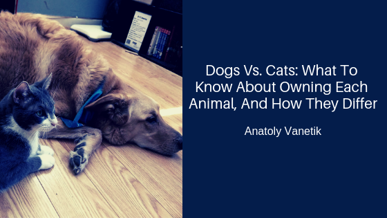 DogsDogs Vs. Cats_ What To Know About Owning Each Animal, And How They Differ