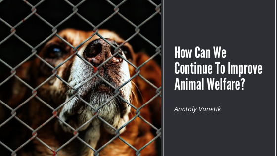 How Can We Continue To Improve Animal Welfare_